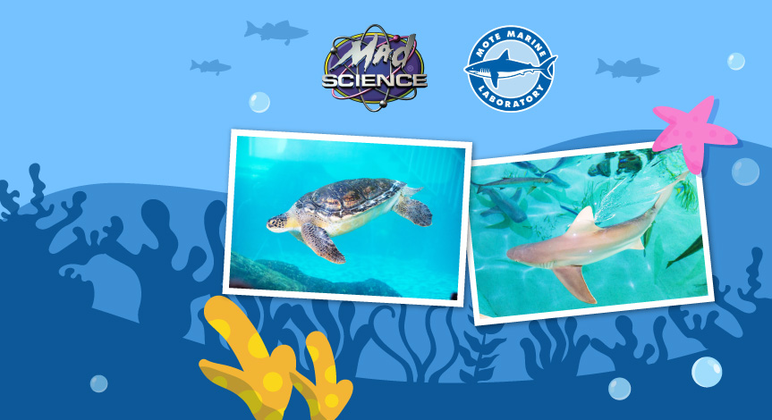 An illustration of the ocean with a picture of a sea turtle and a shark.Both the Mad Science and the Mote Marine Laboratory l